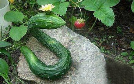 成精的蛇的图片